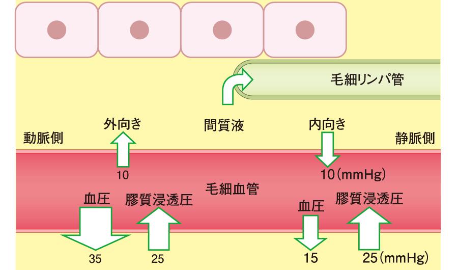 膠質浸透圧