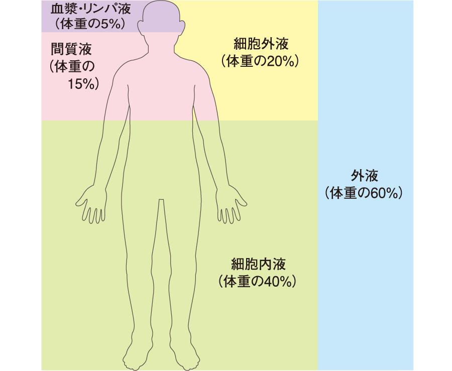 体液の区分