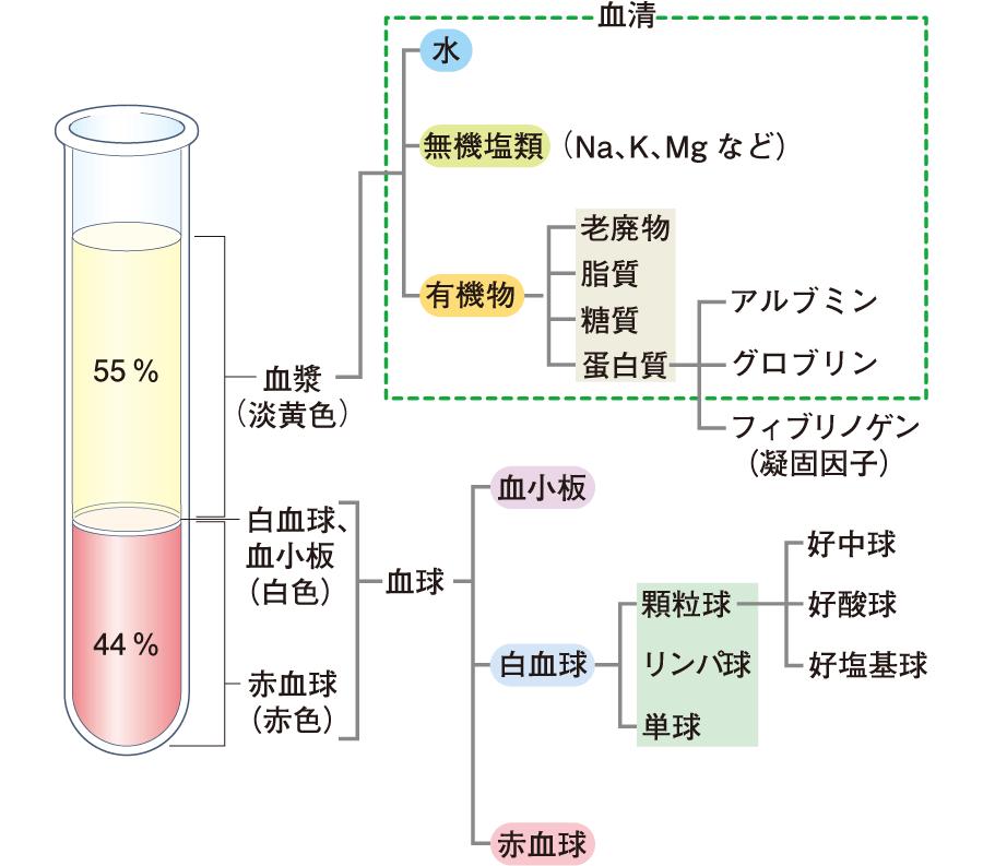 血液の構成成分