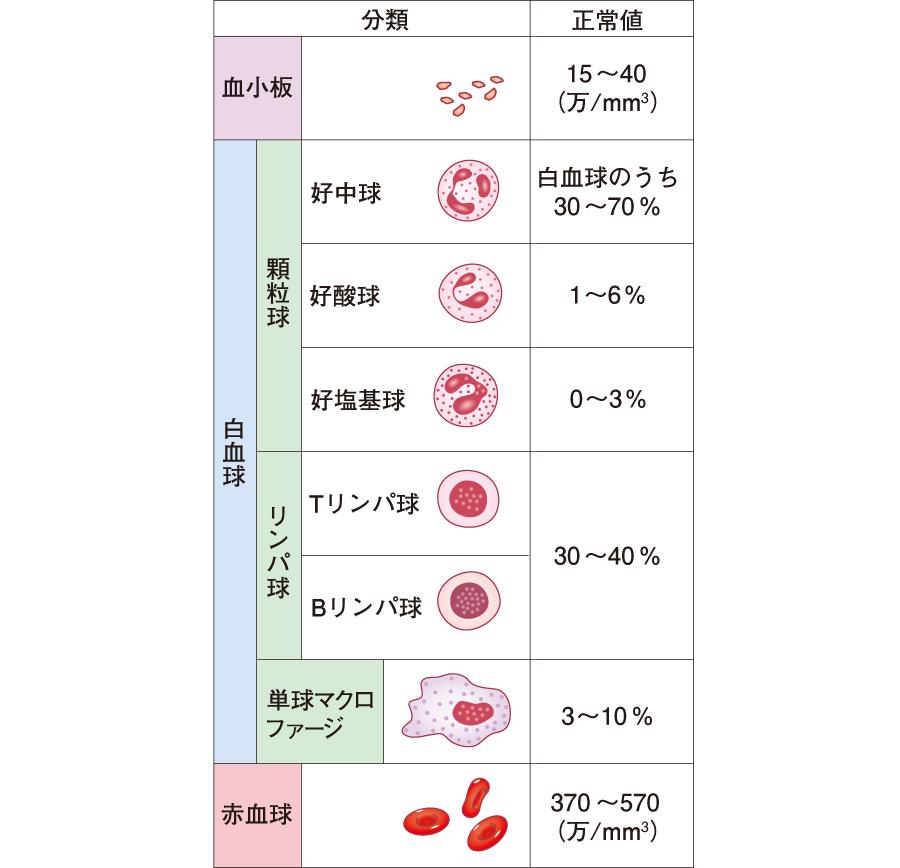 血球の種類