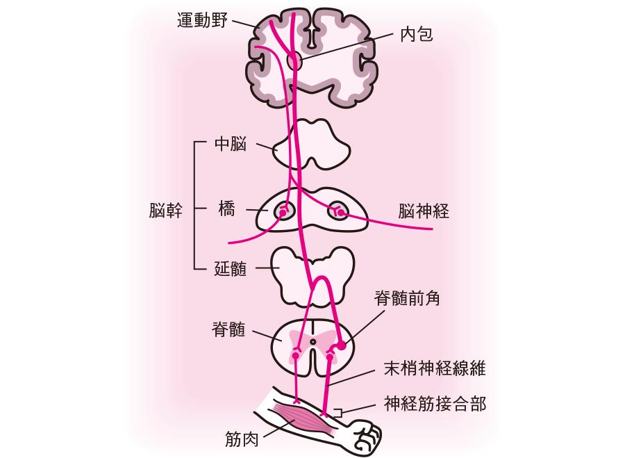 運動障害に関するQ&A 看護のための症状ガイド 看護roo![カン ...
