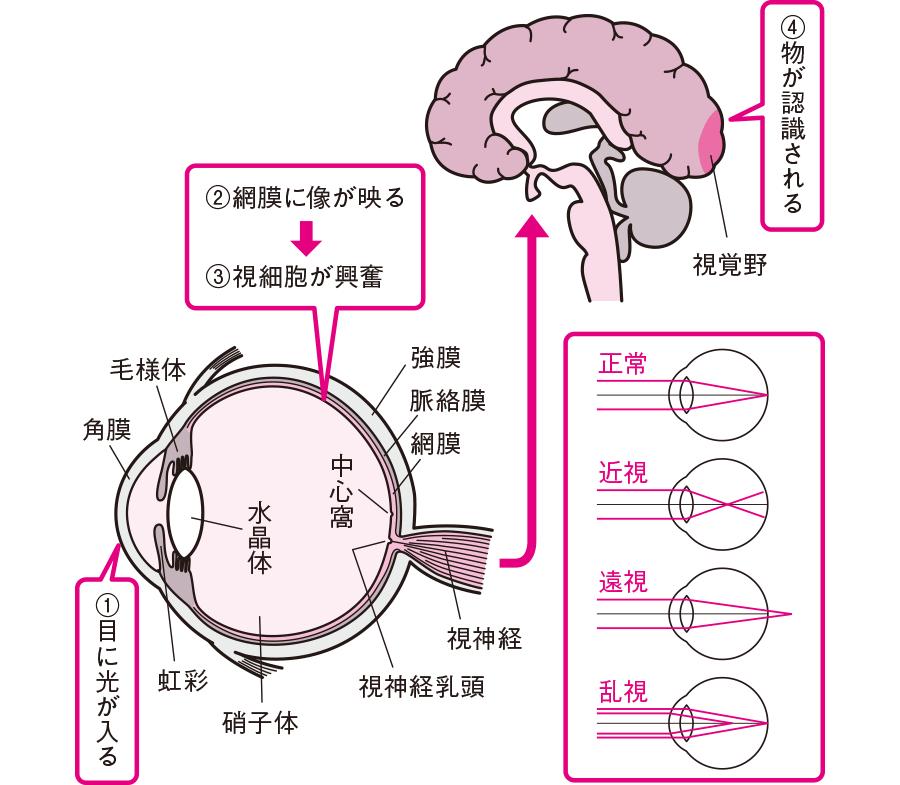 視力が障害されるメカニズム