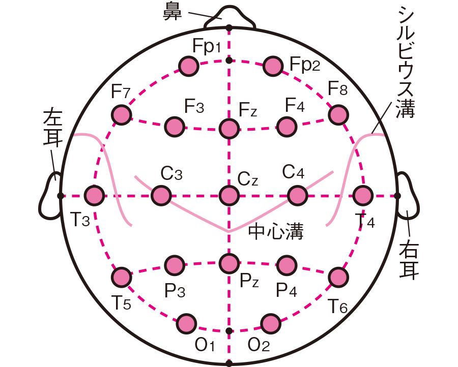 電極の配置(国際10-20法)