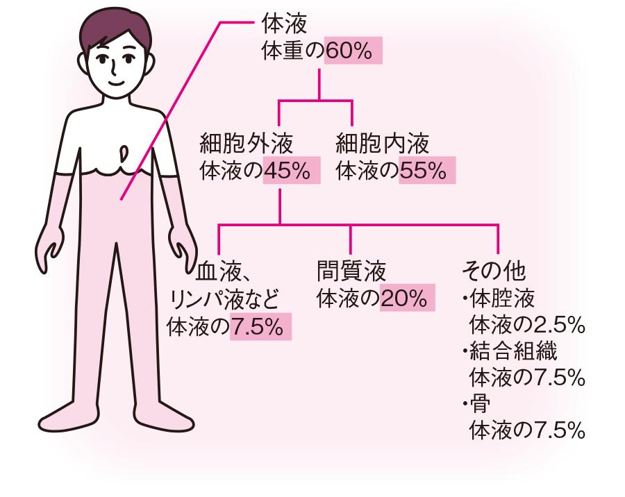 体液の分布