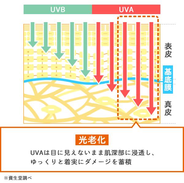 UVAとUVBの皮膚への浸透からくる肌の光老化を示した図