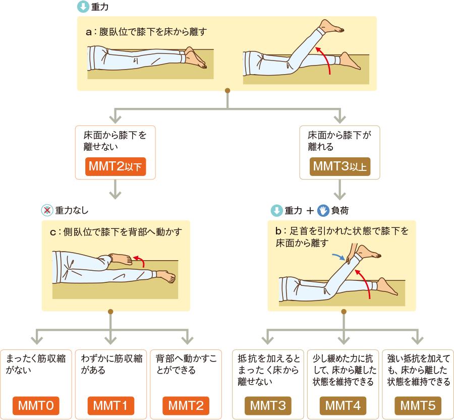 """膝関節の""""屈曲""""の評価(臥位での測定の場合)"""
