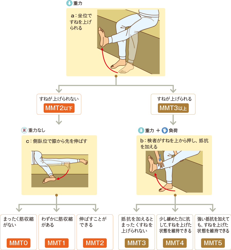"""膝関節の""""伸展""""の評価"""