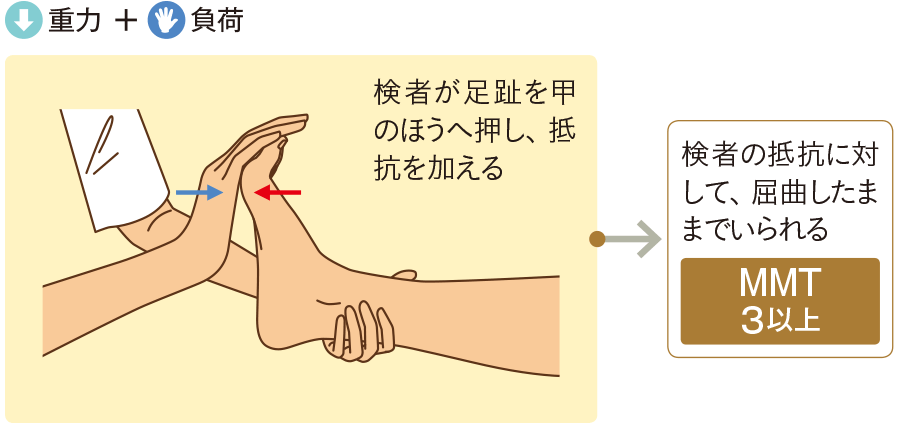 足関節の屈曲