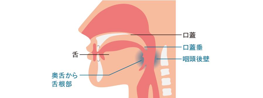 嘔吐反射を引き起こしやすい部位