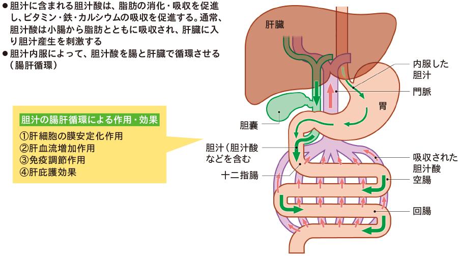 胆汁内服による腸肝循環