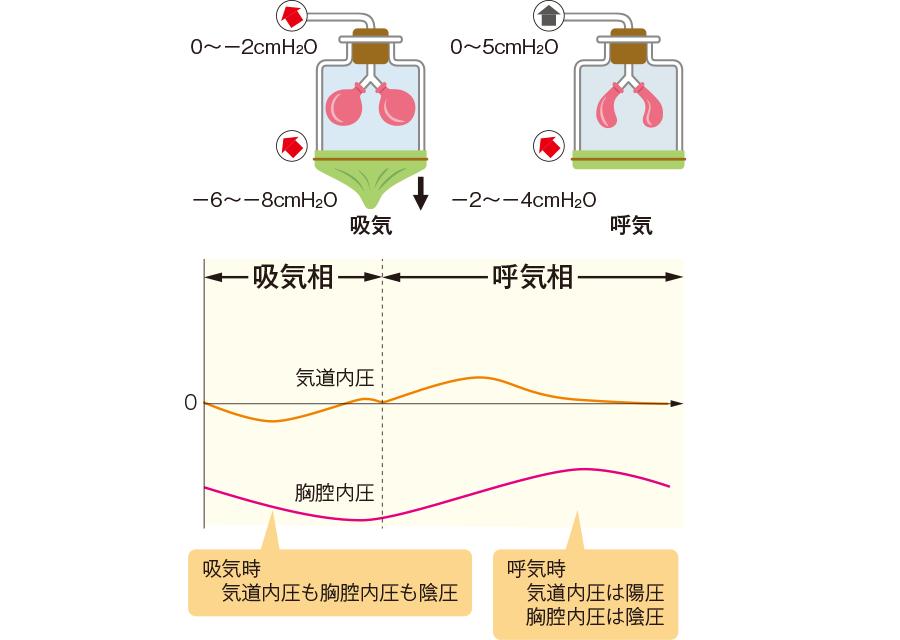 自然呼吸時の胸腔内圧・気道内圧