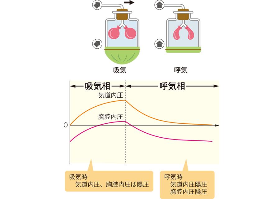 人工呼吸時の胸腔内圧・気道内圧