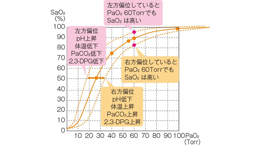 酸素解離曲線の右方・左方偏位