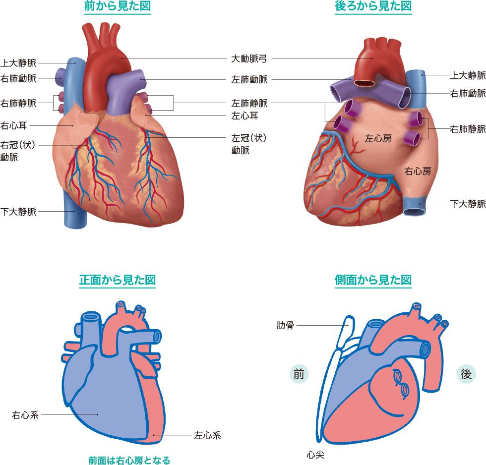 心臓のみため