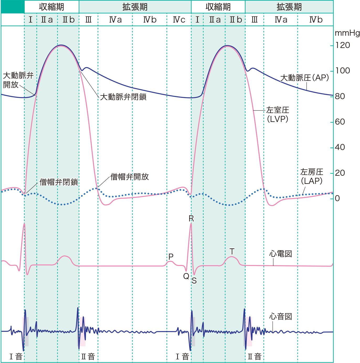 心周期と左心系内圧の変化