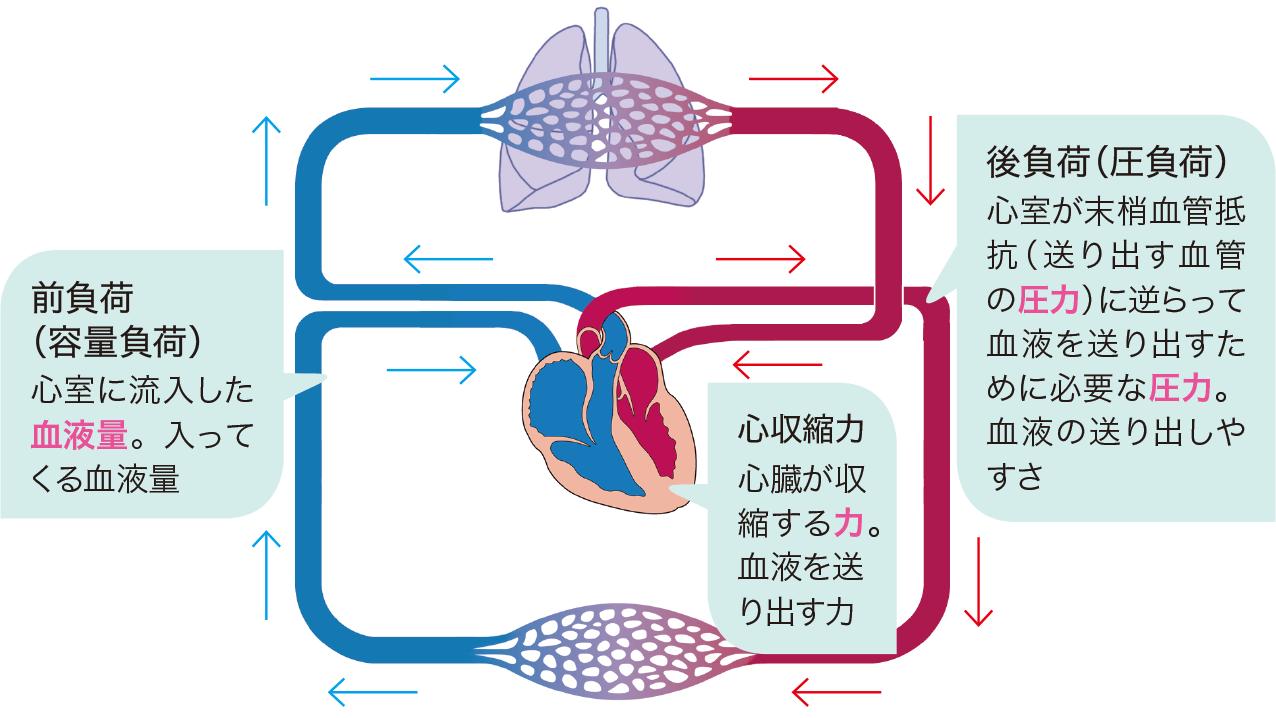 心拍出量の規定因子 前負荷 後負荷 心収縮力