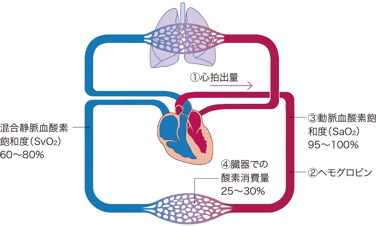 混合静脈血酸素飽和度に影響を与える因子