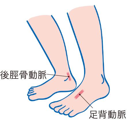 脈を触れる足の動脈