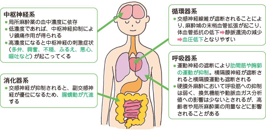硬膜外カテーテルを用いた鎮痛における主な副作用