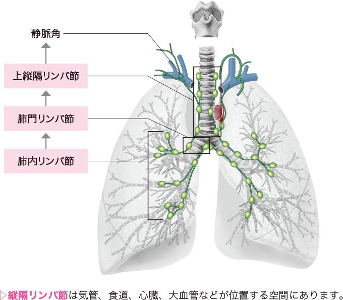 肺野リンパの構造と流れ