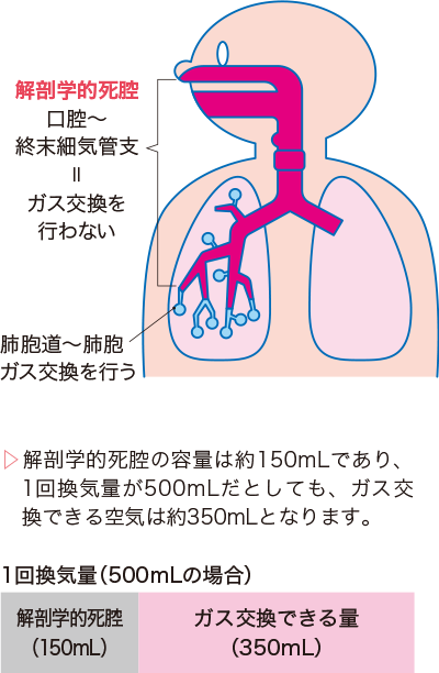 解剖学的死腔