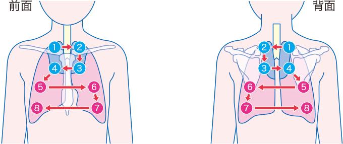 呼吸音の聴診部位と順序