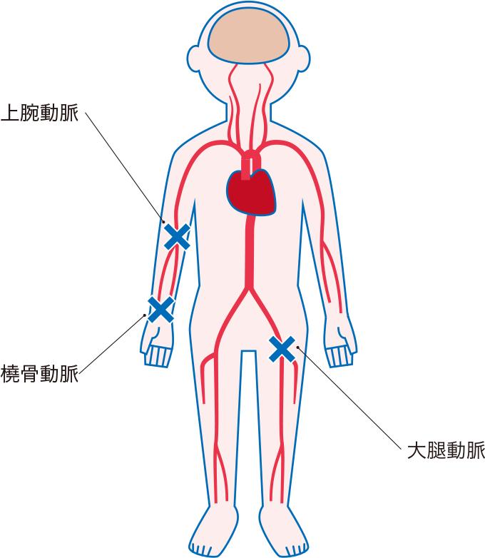 動脈血の主な採取部位