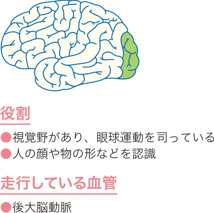 図10後頭葉の役割と血管走行