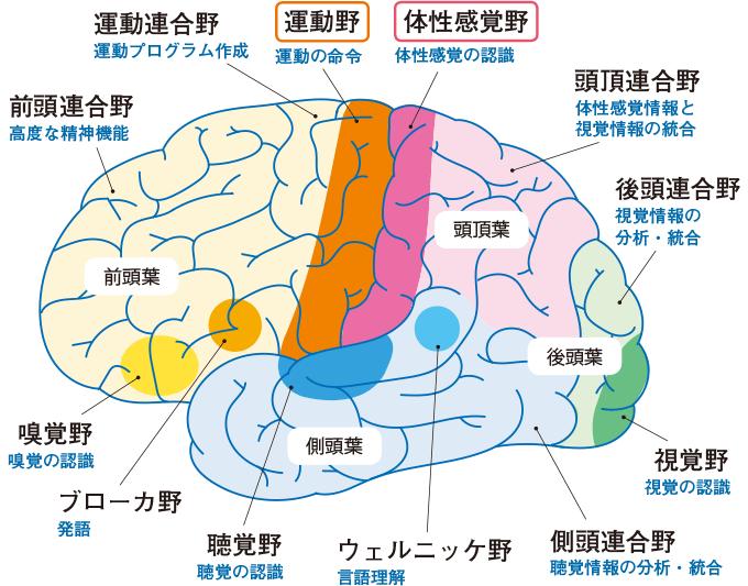 図12大脳の機能