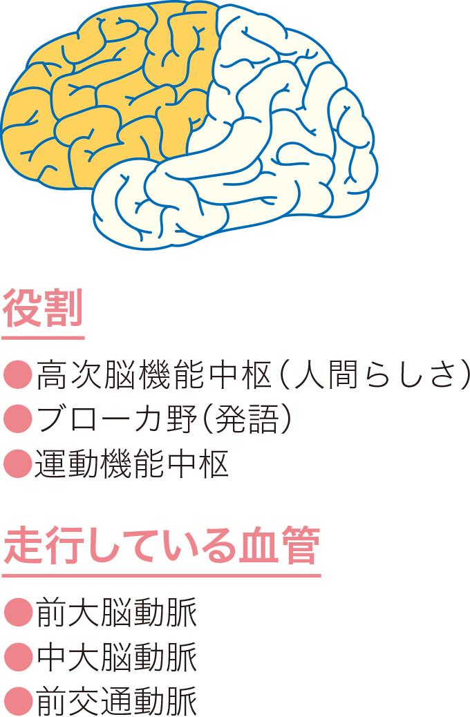 図4前頭葉の役割と血管走行