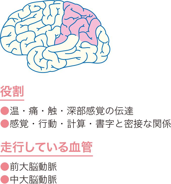 図6頭頂葉の役割と血管走行