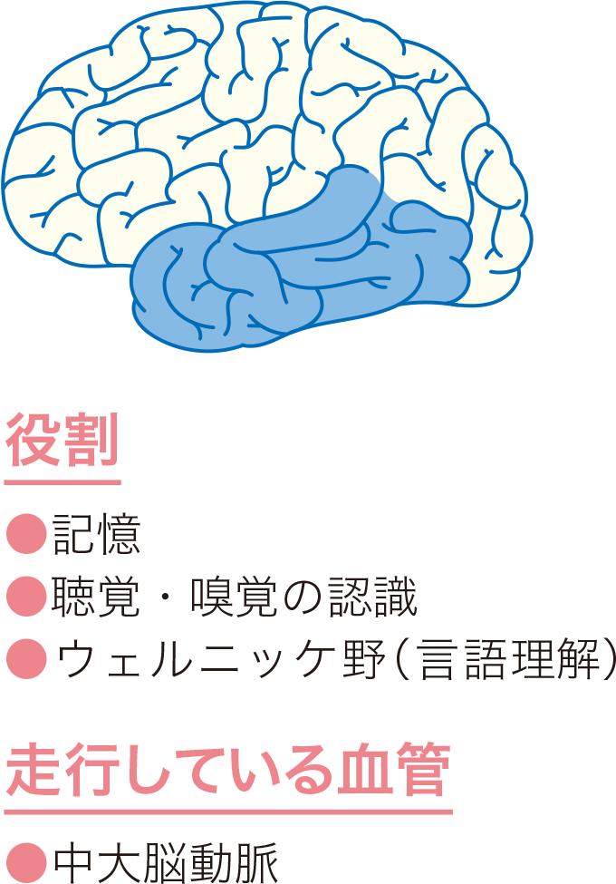図8側頭葉の役割と血管走行