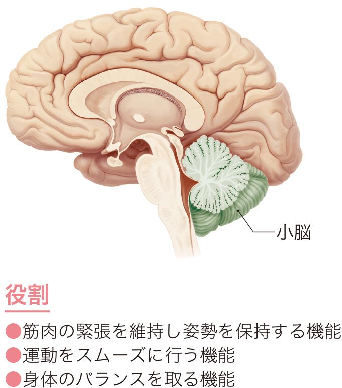 図1小脳の役割