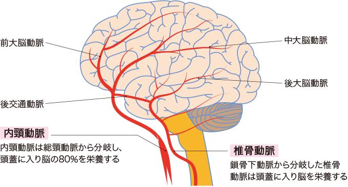 図1内頸動脈と椎骨動脈