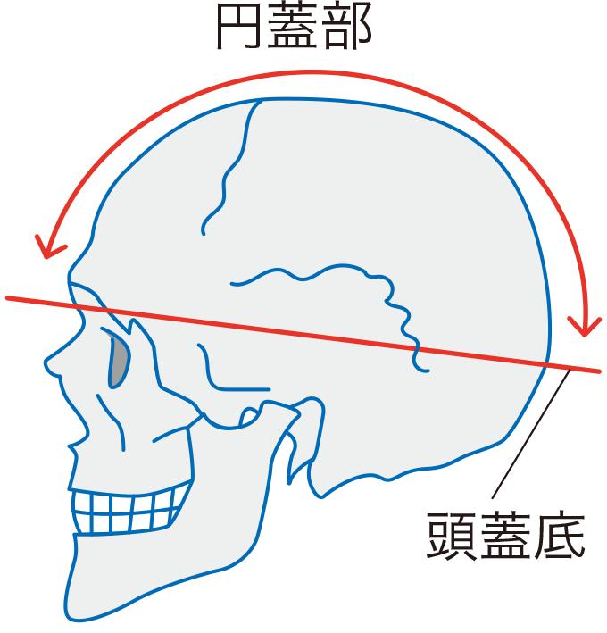 図3円蓋部と頭蓋底