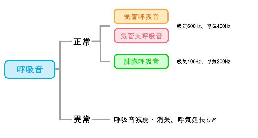 呼吸音の分類