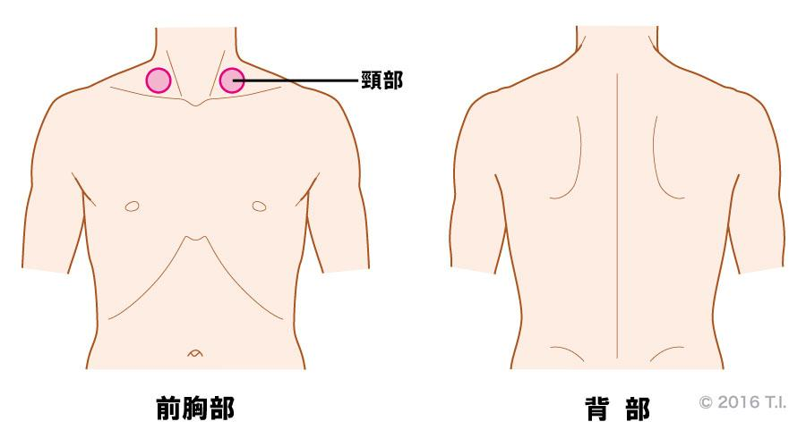気管呼吸音が聴こえる位置と音の特徴