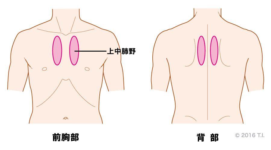 気管支呼吸音が聴こえる位置と音の特徴
