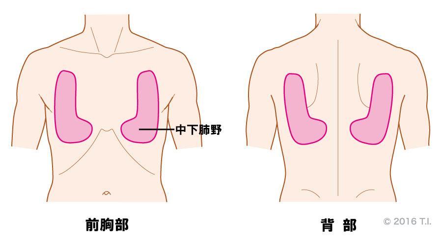 肺胞呼吸音が聴こえる位置と音の特徴