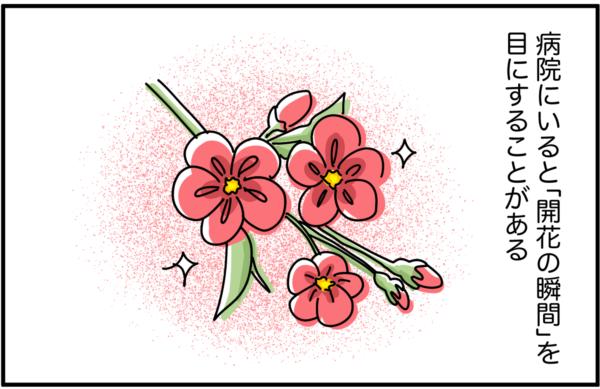 病院にいると「開花の瞬間」を目にすることがあります。