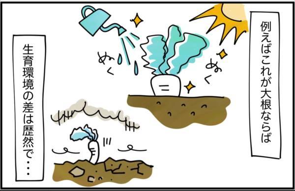 例えばこれが大根ならば、天候と水に恵まれて育つものと、天候や水不足で育つもののように、生育環境の差は歴然で…