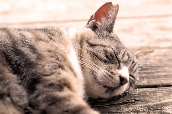 ネコはよく眠ります