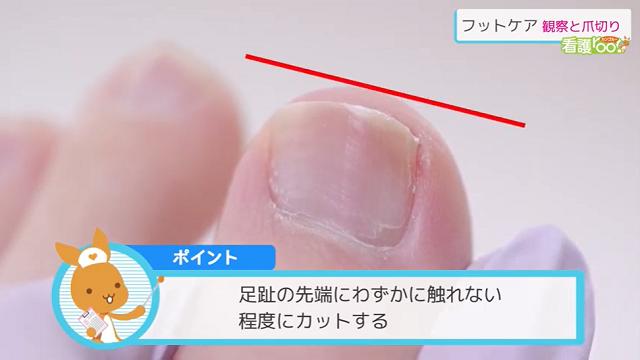 足趾の先端にわずかに触れない程度にカットする
